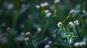 blomma little Royaltyfri Fotografi