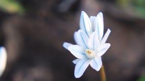 blomma little som ?r vit arkivfilmer