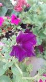 blomma många Royaltyfria Bilder