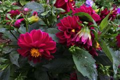 blomma många Royaltyfria Foton