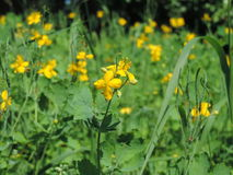 Blomma makro, natur, gul blomma Royaltyfri Foto