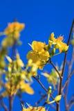 blomma marknaden Arkivfoto