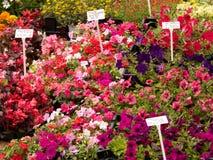 blomma marknaden Arkivbild