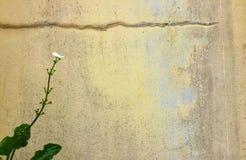 Blomma med cementväggbakgrund arkivbilder