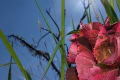 Blomma med den trevliga himmelbakgrunden arkivbilder