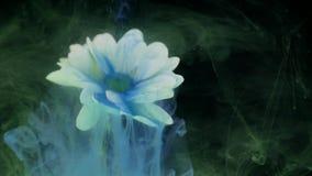 Blomma med färgpulverabstrakt begreppbakgrund stock video
