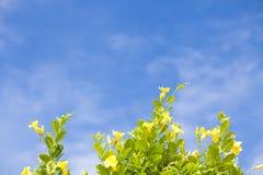 blomma med himmel Arkivbilder
