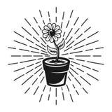 Blomma med illustrationen för strålvektortappning Royaltyfri Illustrationer
