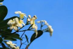 Blomma med klar himmel Arkivfoton