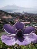 Blomma med Mount Vesuvius Arkivfoto