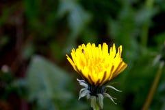 Blomma med myror Royaltyfri Foto