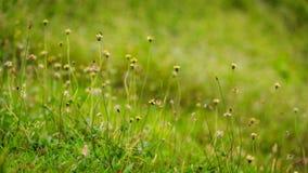 Blomma med naturlig Bokeh bakgrund Arkivbild