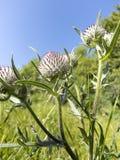 Blomma med ryggar Arkivbild
