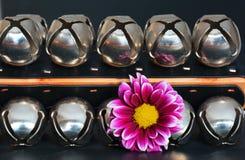 blomma med slädeklockor Arkivfoton