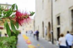 Blomma med suddiga hus och folk fotografering för bildbyråer