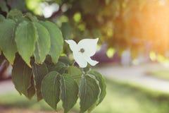 Blomma med sunburst Arkivfoto
