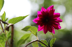 Blomma med tillbaka ljus Arkivfoton