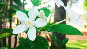 Blomma med vindflöde stock video