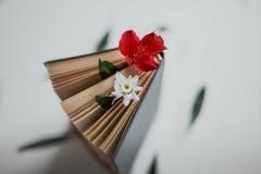 Blomma mellan sidorna av boken arkivbild