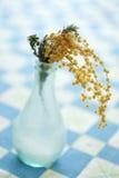 blomma mimosaen Arkivfoton