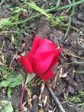 blomma mitt arkivfoto