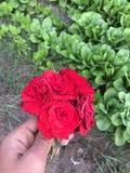 blomma mitt arkivfoton