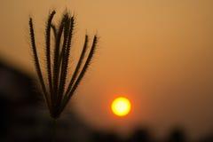 blomma när solnedgången Royaltyfri Foto
