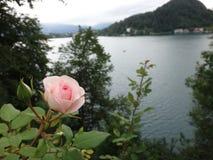 Blomma nära sjön Royaltyfri Fotografi