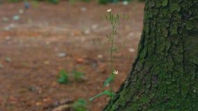 Blomma nära trädstammen stock video