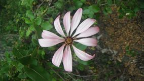 Blomma/natur arkivfoton