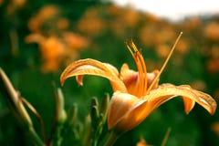 Blomma natur royaltyfri bild