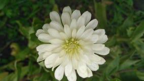 Blomma Natur royaltyfria foton