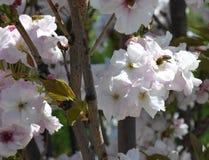 Blomma och bi Royaltyfri Fotografi