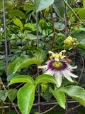 Blomma och biet Arkivfoton