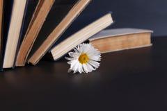 Blomma och bok på skrivbordet fotografering för bildbyråer