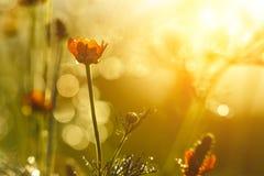 Blomma och bokeh Royaltyfri Foto