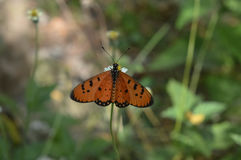 Blomma och butterfly2 Royaltyfri Fotografi