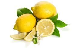 Blomma och citroner för citronträd Arkivbilder