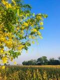 Blomma och cornfield Royaltyfria Bilder