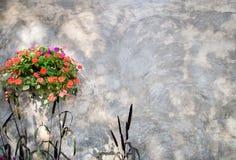 Blomma och dekorativ hirs med betongväggen Royaltyfri Bild