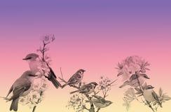 Blomma- och fågelbakgrund arkivfoto