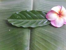 Blomma- och gräsplanträd Fotografering för Bildbyråer