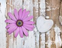 Blomma och hjärta arkivfoton