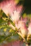 Blomma och ljus i morgonen Royaltyfri Bild