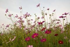 Blomma och mörkersolnedgång Arkivbilder