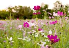 Blomma och mörkersolnedgång Royaltyfri Fotografi