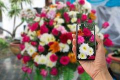 Blomma och mörkersolnedgång Arkivfoton