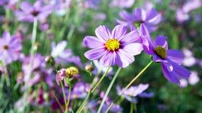 Blomma och mörkersolnedgång Royaltyfria Bilder