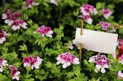 Blomma och prislapp fotografering för bildbyråer