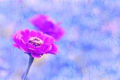 Blomma och reflexion. Retro bakgrund. Royaltyfri Fotografi